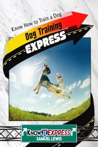 dog-training-express